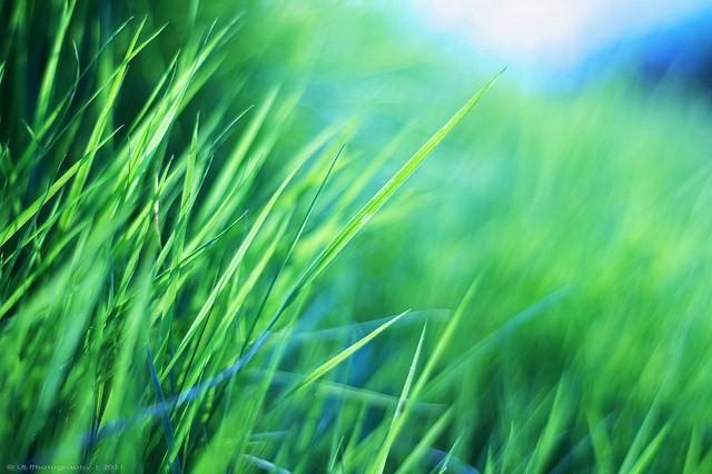 fili d'erba - foto dalla rete