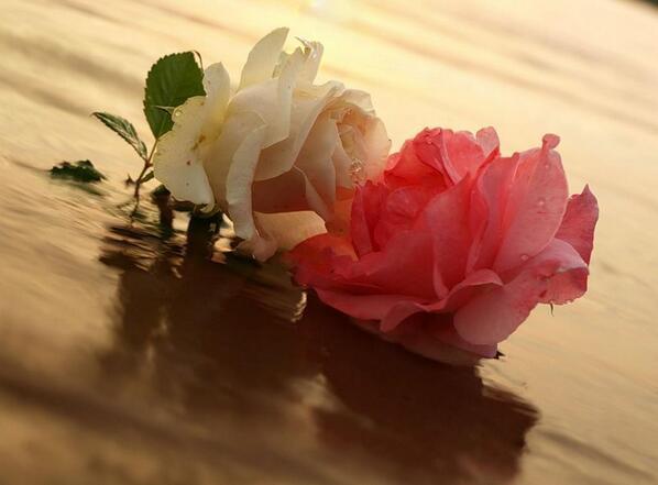 rosa e rosa