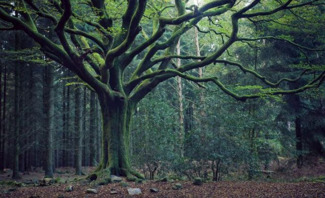 foresta-di-broccaliande